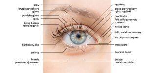 Blefaroplastyka – u kogo i jakie efekty można osiągnąć?